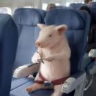 Când o zbura porcul